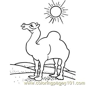 Camel In Desert Sun Coloring Page