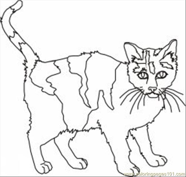 coloring pages 24 cat coloring pages 3 animals cats