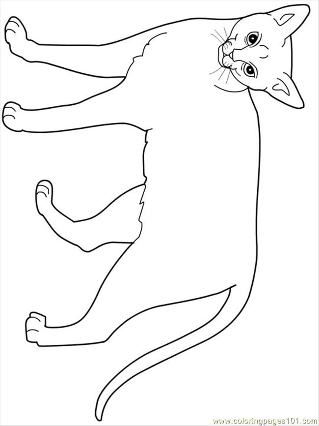 Coloring Pages Abyssinian Animals Gt Cats