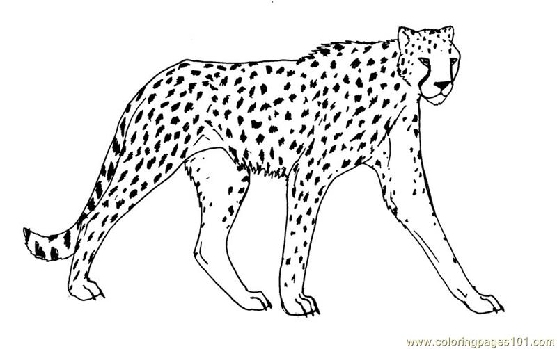 Coloring Pages Cheetah Animals Gt Cheetah Free Cheetah Coloring Page