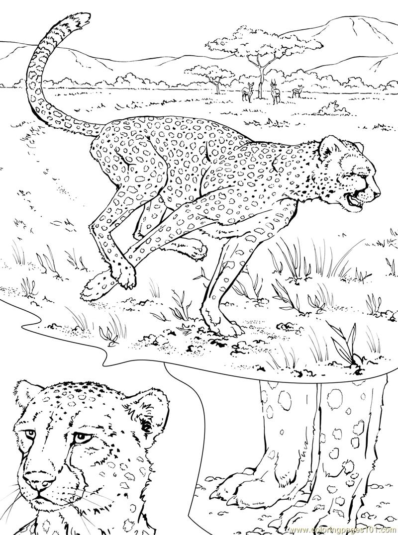 Coloring Pages Dangers Cheeta Animals