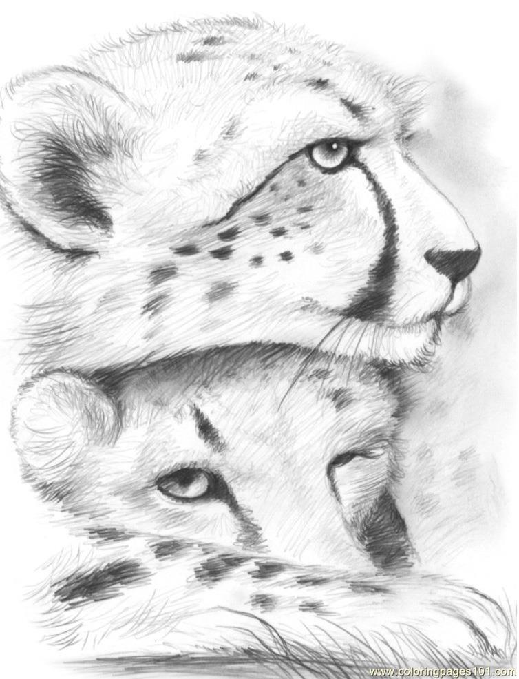 Coloring Pages Cheetahs gregchapin