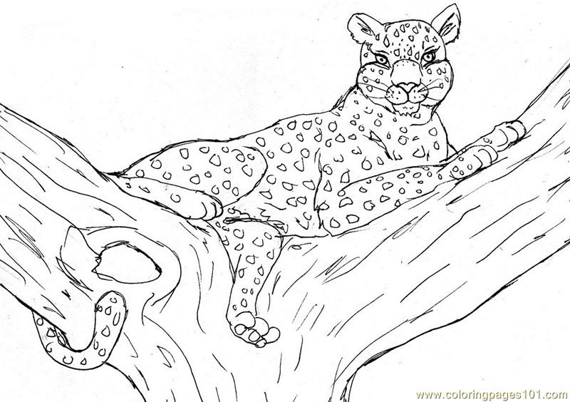 Leopard coloring page Free Printable