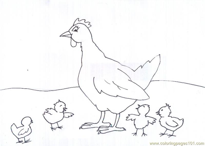 chicken coloring pages - photo#35