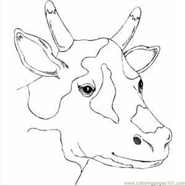 cow head coloring pages - photo #9