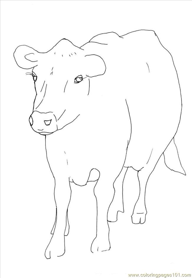 Coloring Pages Animal Cow Mammals
