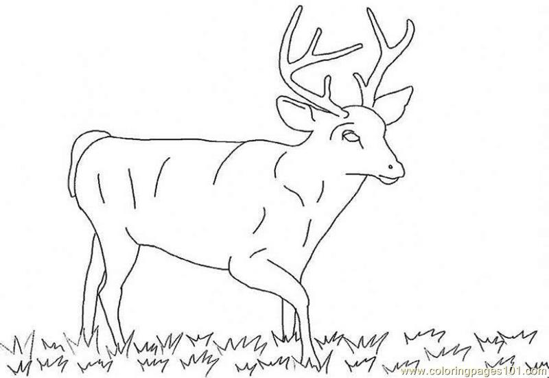 Deer Coloring Pages List Jobspapa