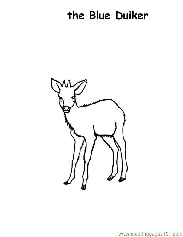 Coloring Pages Deer duiker Mammals