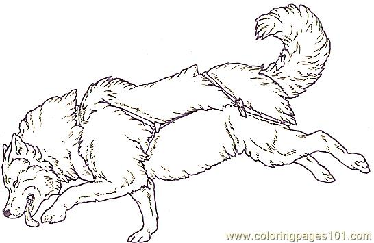 snow dog coloring pages - photo#31