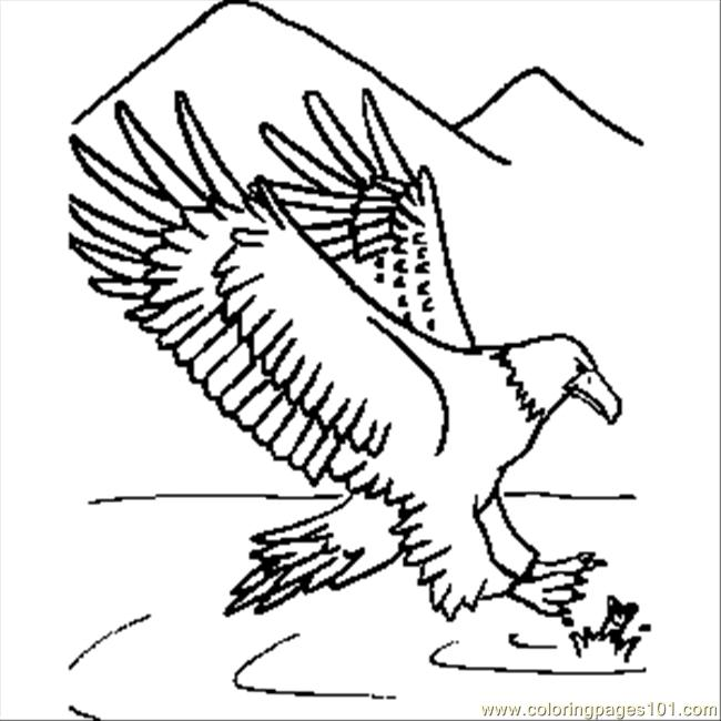 Eagle Coloring Pictures http://www.coloringpages101.com/printable_page/6479/Eagle/Eagle.aspx