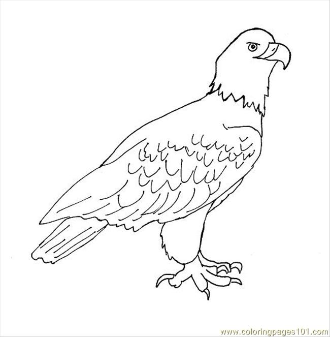 Coloring Pages Eagle Drawing1 (Birds > Eagle) - free printable ...