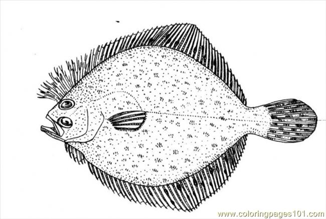 Coloring Pages Flounder 2 Animals gt Fishes free
