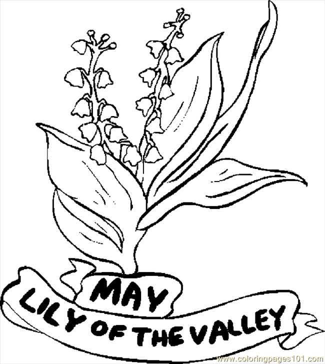 coloring page 05 may lily of valley 1 natural world flowers 05 may