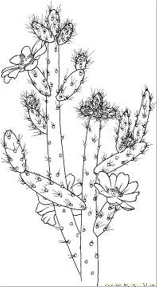 free printable cactus cow poke picture to color wild west coloring