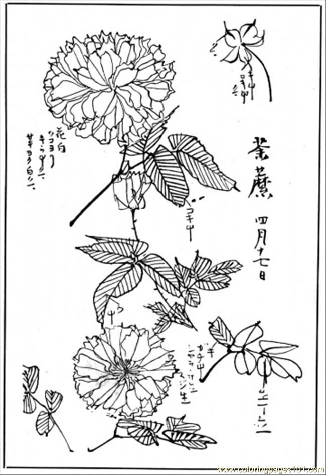 Chrysanthemum Coloring Pages Kevin Henkes Chrysanthemum Coloring Pages