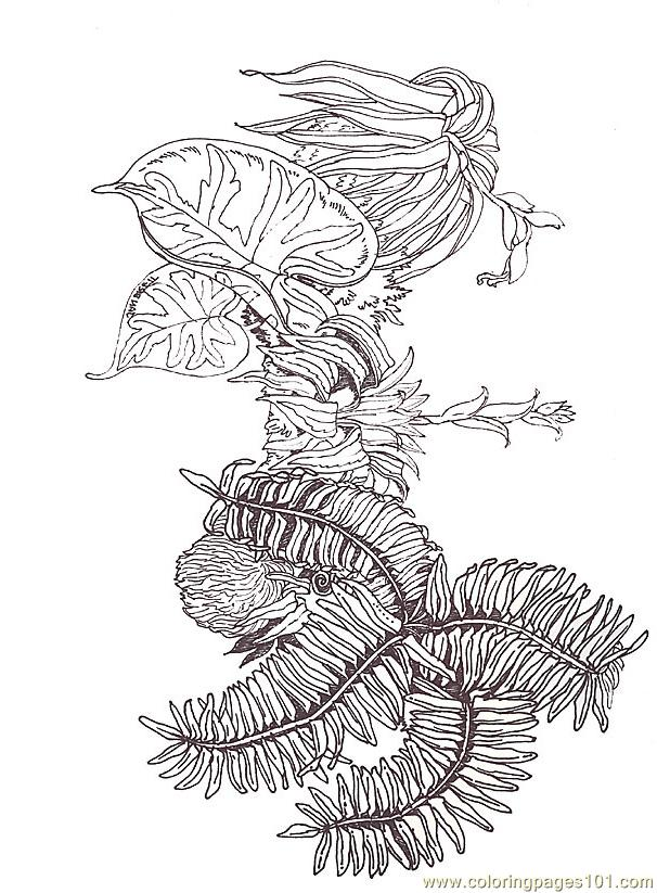 fern coloring pages - photo#21