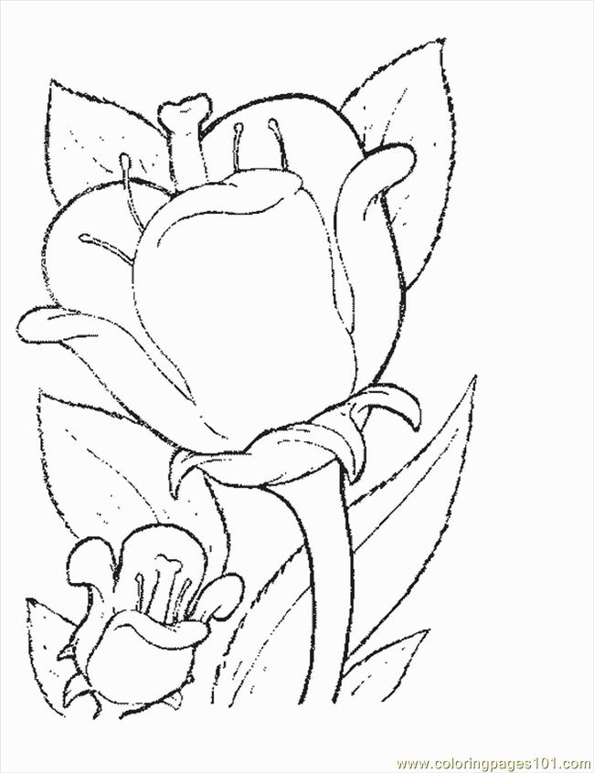 crocus coloring page - free coloring pages of crocus