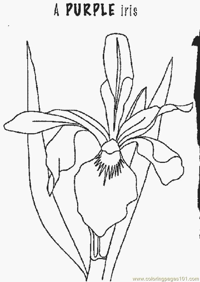 iris coloring pages - photo#16