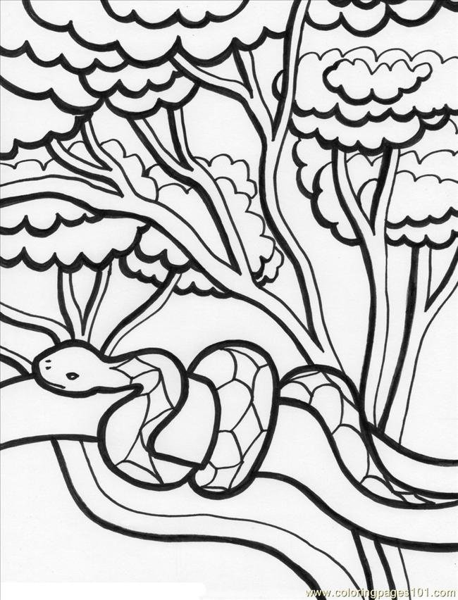 Coloring Pages Rainforest 2b2 Natural