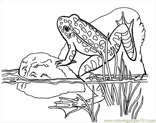 Coloring Pages Leo Amphibians gt Frog free printable
