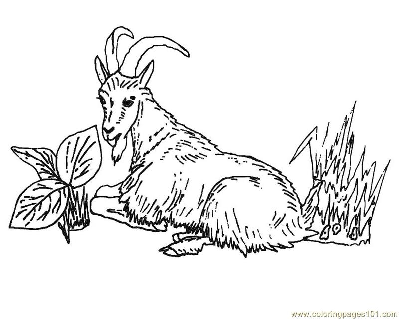 Coloring Pages Goat lay on tree Mammals gt Goat free