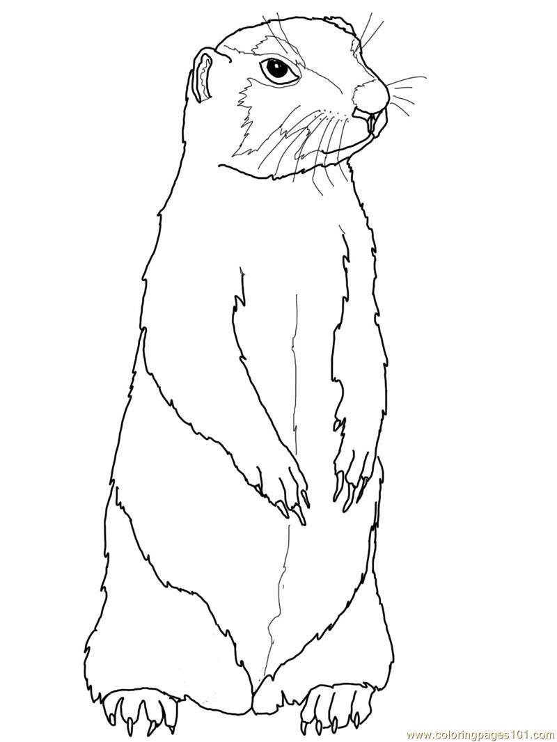 Coloring Pages Prairie Gopher Or Prairie Dog Animals Gt Gopher Or Prairie Dog