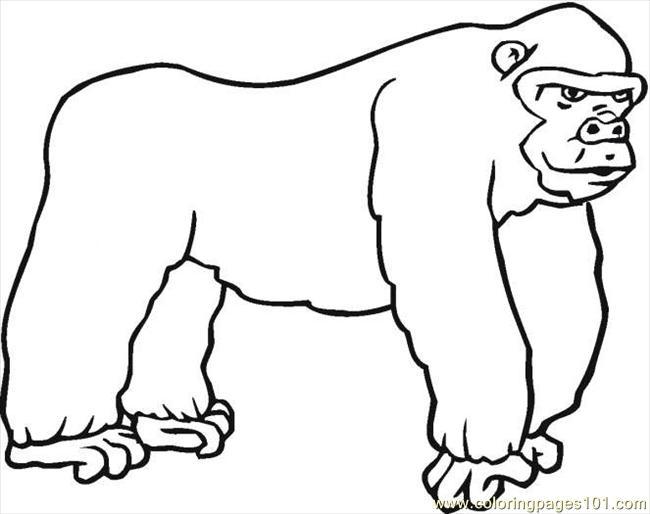 gorilla colori