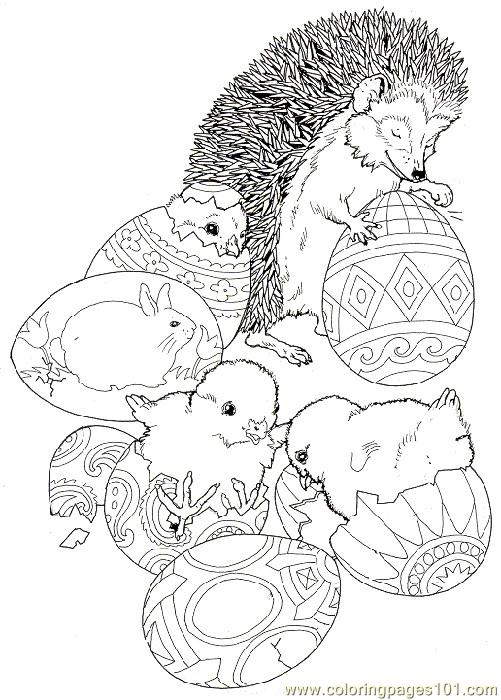 Coloring Pages Hedgehog 2 Mammals
