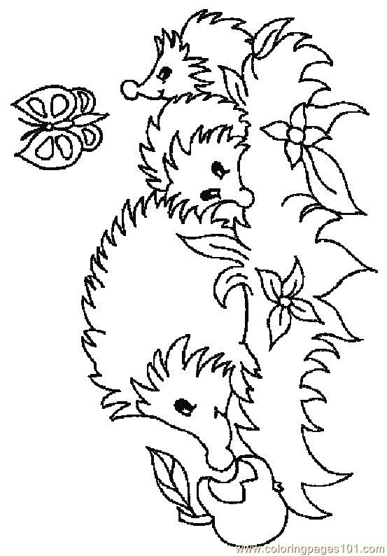 coloring pages hedgehog 5 animals hedgehogs free