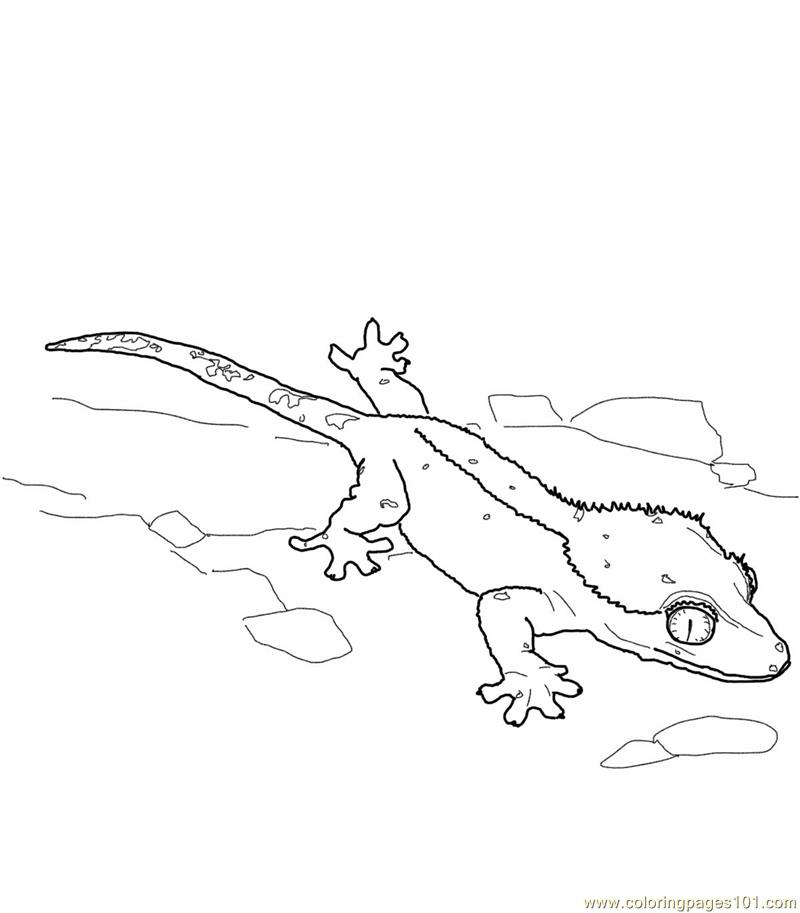 Coloring Pages Crested gecko lizard Reptile gt Lizard