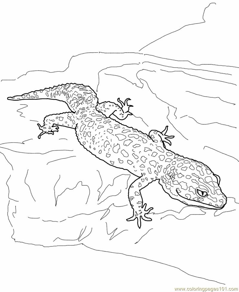 Coloring Pages Leopard gecko lizard