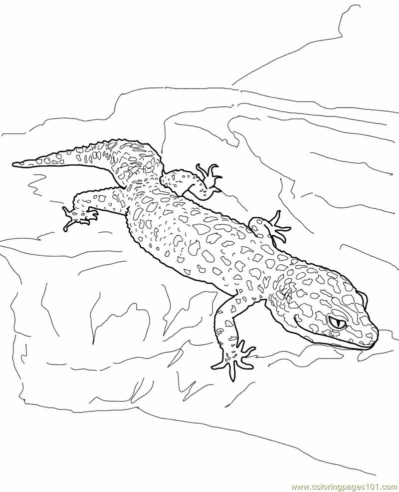 Printable Lizard Coloring Coloring Pages