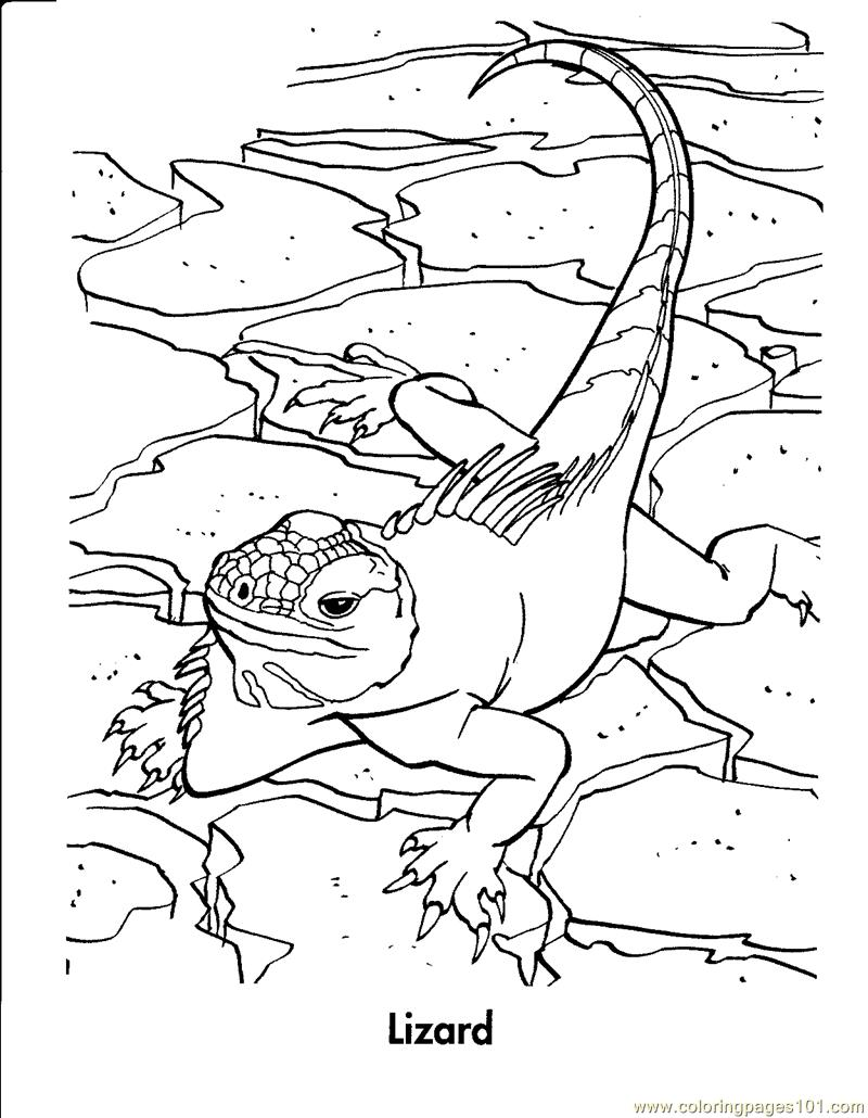 Coloring Pages Lizard Reptile