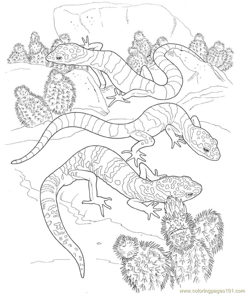 free armadillo para colorear coloring pages