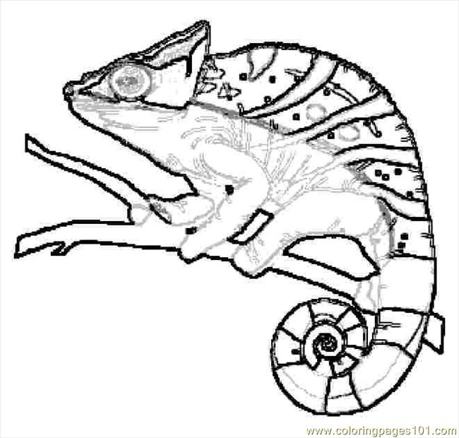Lizard printable for Lizard coloring pages