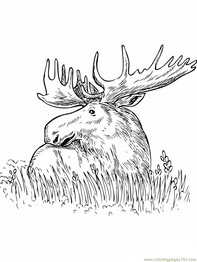 Coloring Pages Moose sitting grass Mammals gt Moose