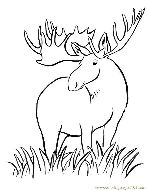 Coloring Pages Moose big horn Animals