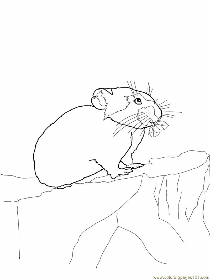 Coloring Pages Pika mouse Mammals
