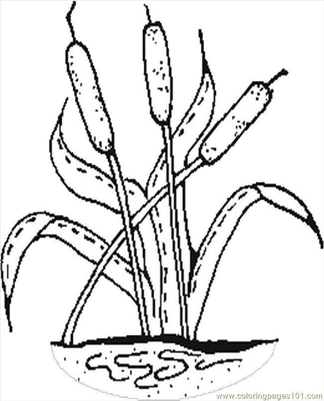 free printable coloring pages cattails plants   Coloring Pages Cattails (Entertainment > Others) - free ...