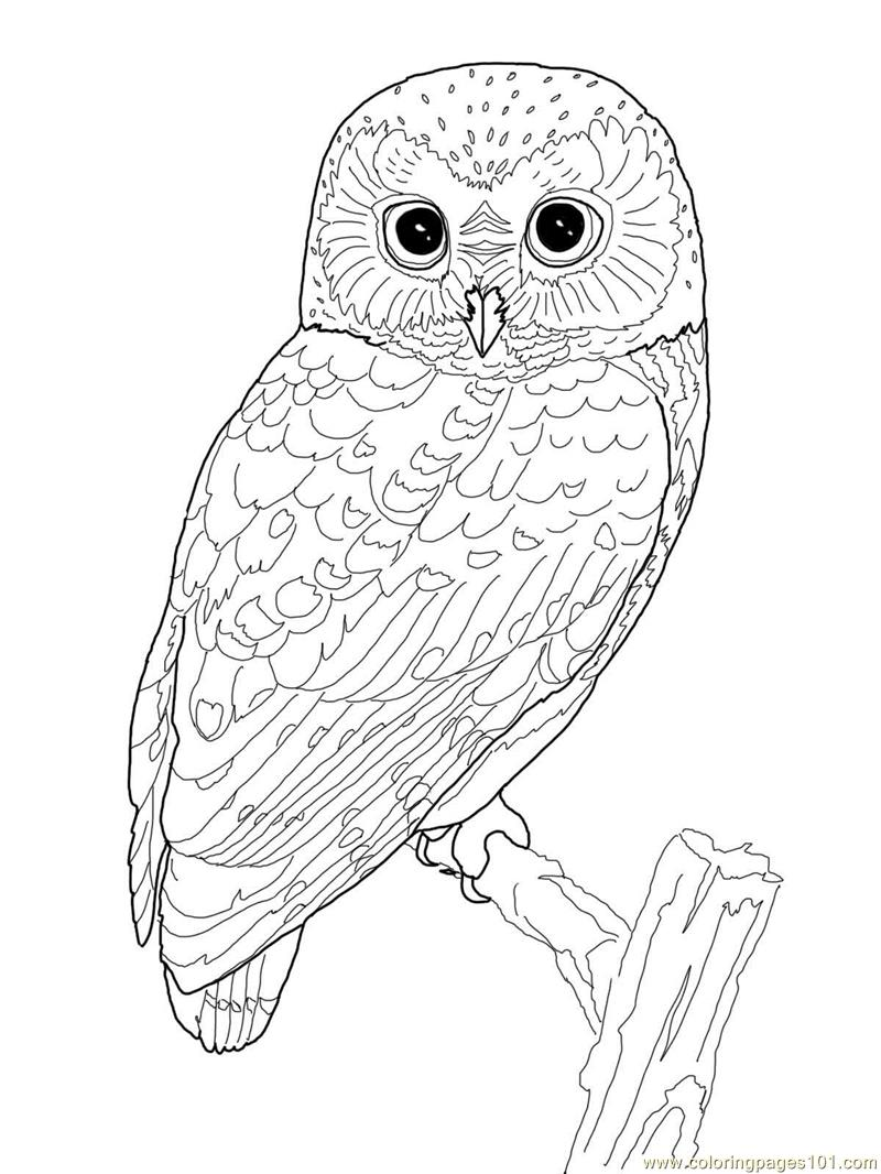 Snowy Owl Simple Coloring Pages Snowy Owl Coloring Pages