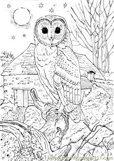 Coloring Pages Owl sit school Birds gt Owl free