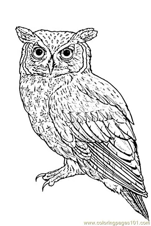 Realistic Owl Coloring Pages also Free Printable Owl Coloring Pages ...