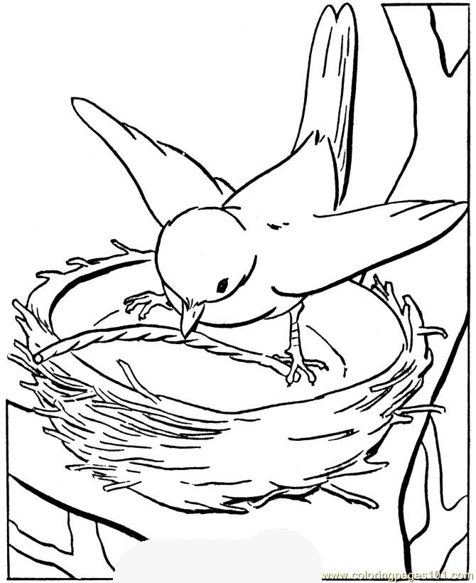 Coloring pages parrot birds parrots free printable for Free printable parrot coloring pages