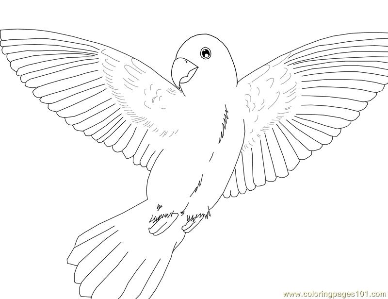 printable coloring pages parrots - photo#15