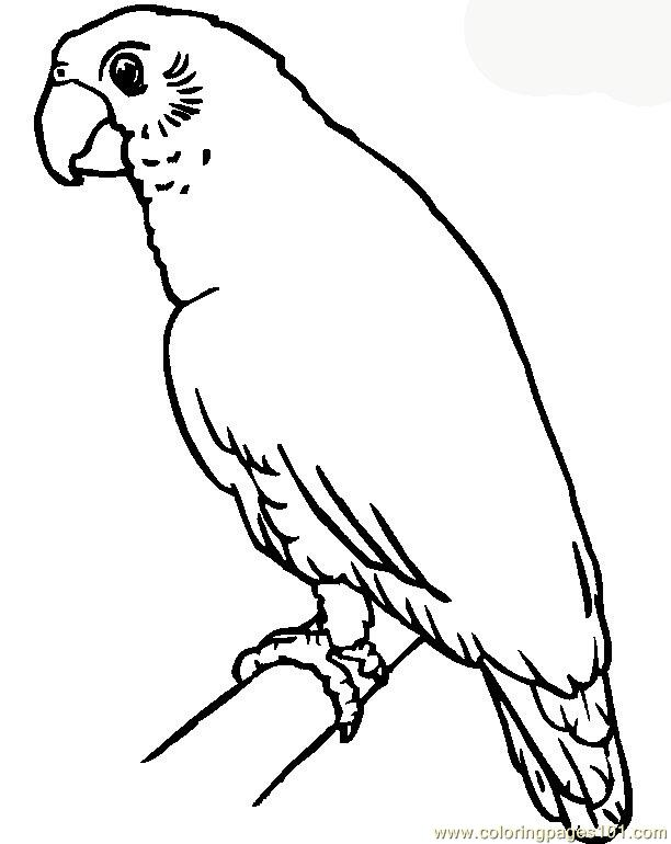 printable coloring pages parrots - photo#24