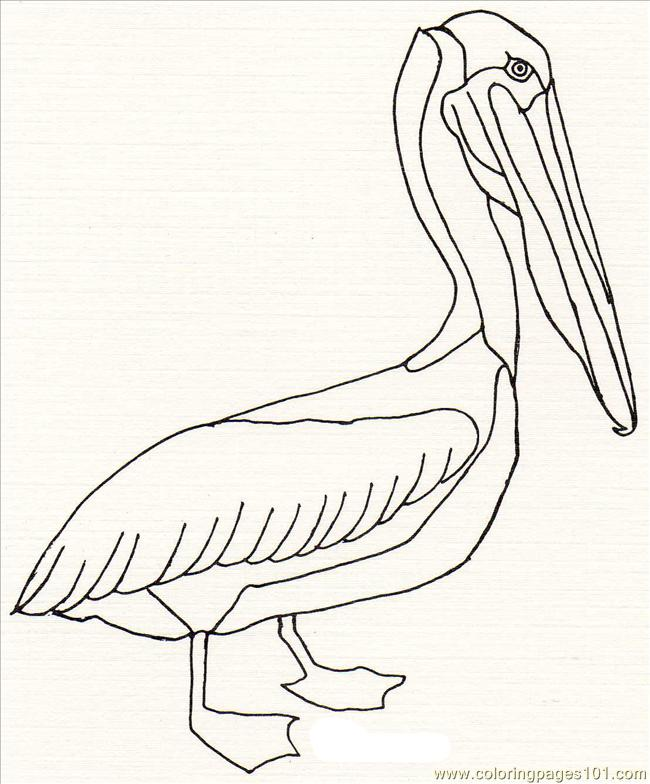 Coloring Pages Pelican 321 Birds Gt Pelican