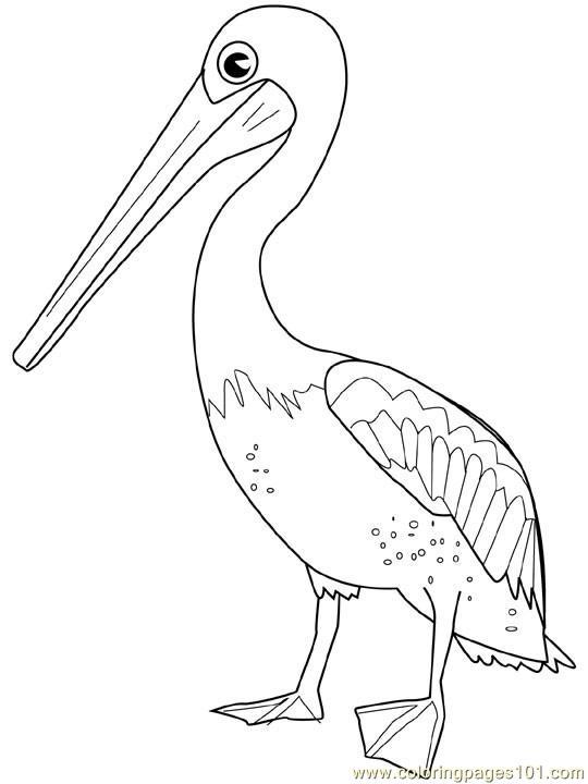 Pelican22