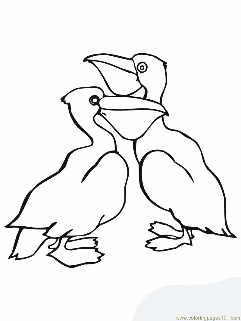 new orleans pelicans coloring pages - photo#16