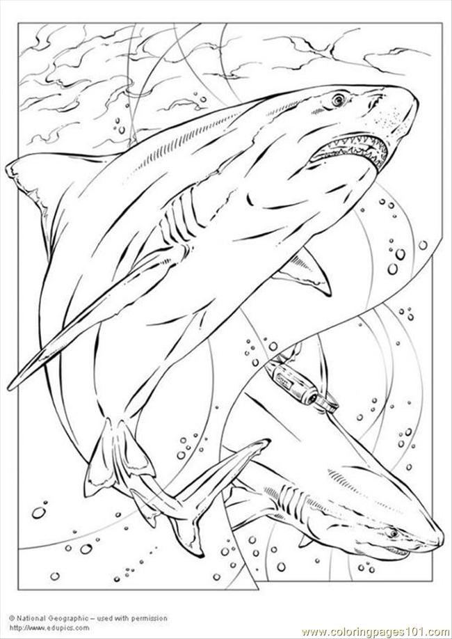 Coloring Pages Bull Shark P5735