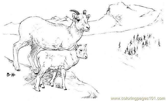 Coloring Pages Dallsheep Mammals
